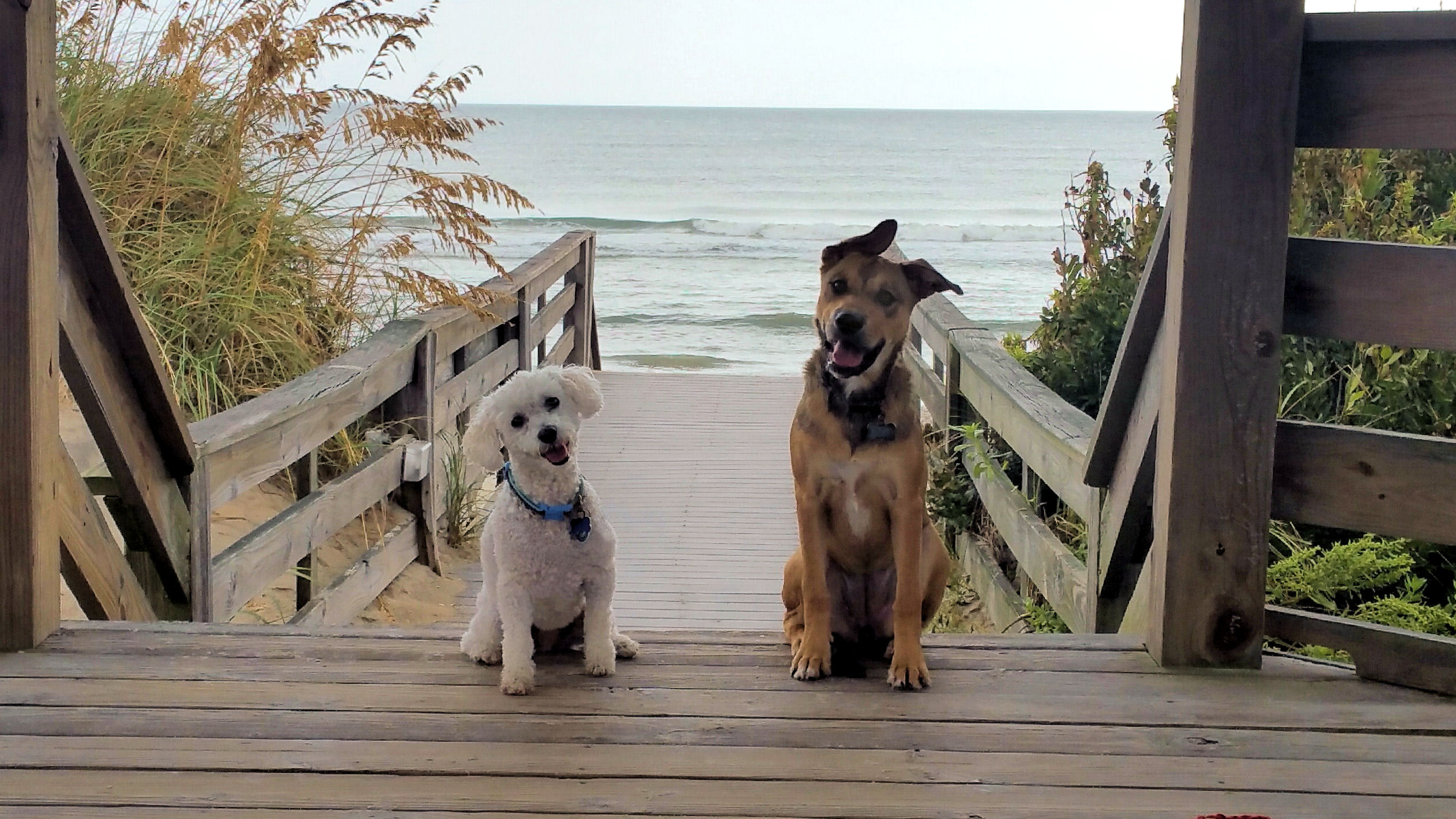 Beach dogs on walkway
