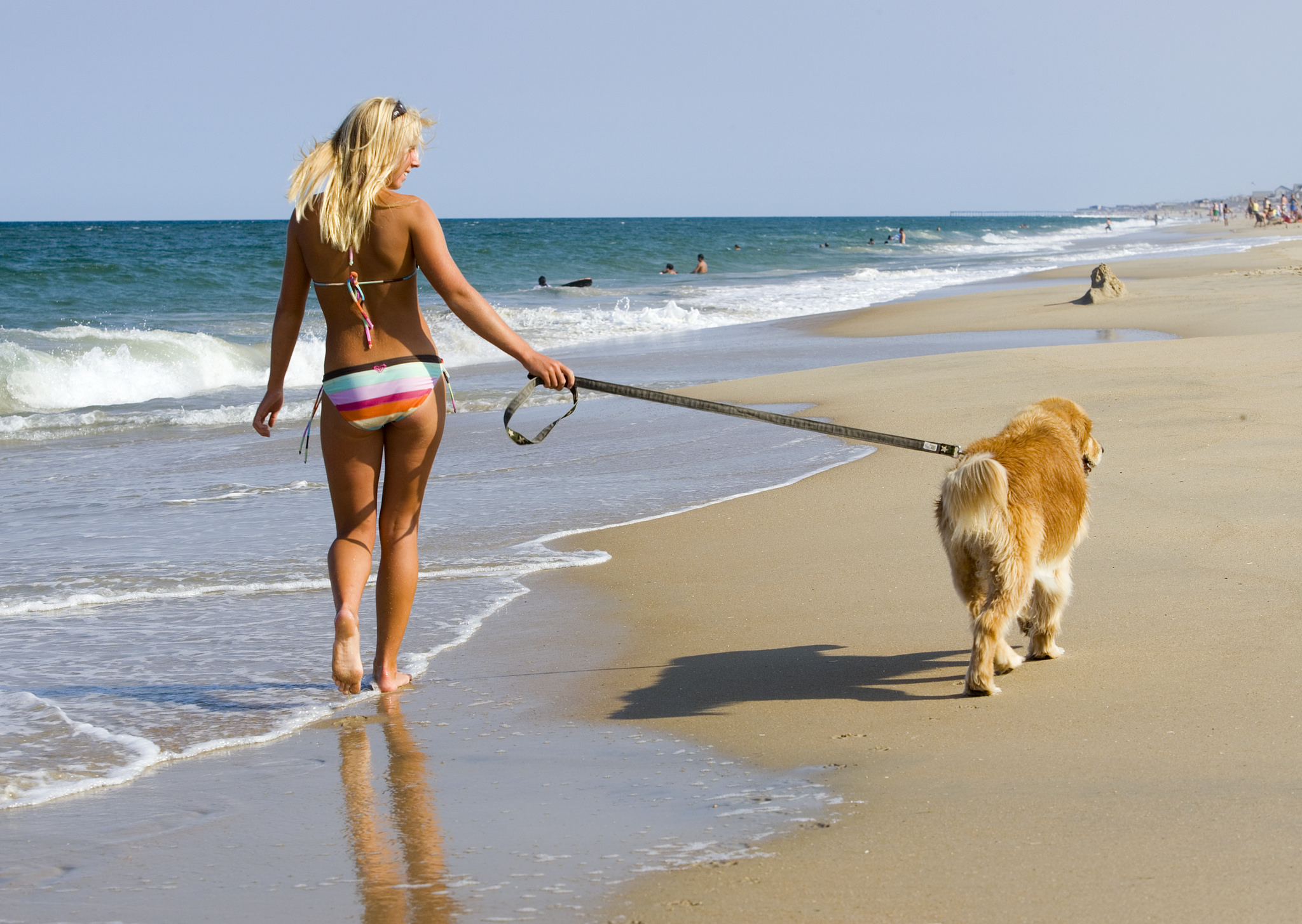 Girl and Dog Walking on the beach