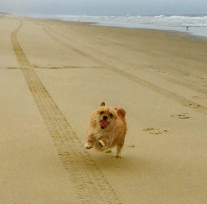 happy dog on beach