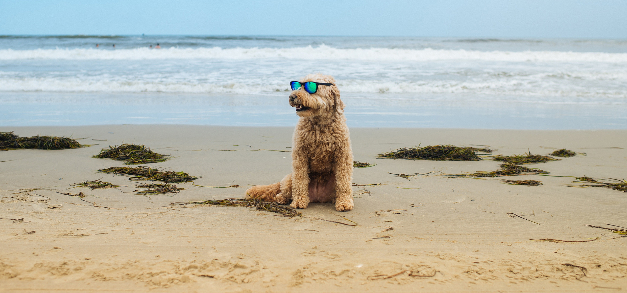 Things to Do With Your Dog in the Outer Banks