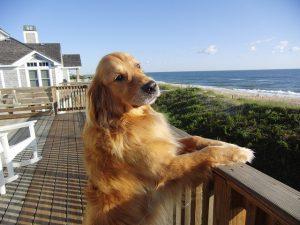 pet friendly oceanfront