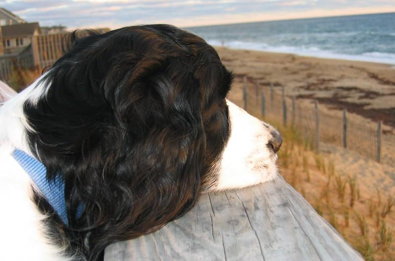 oceanfront dog