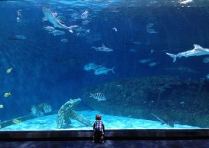 NC Aquarium Roanoke Island