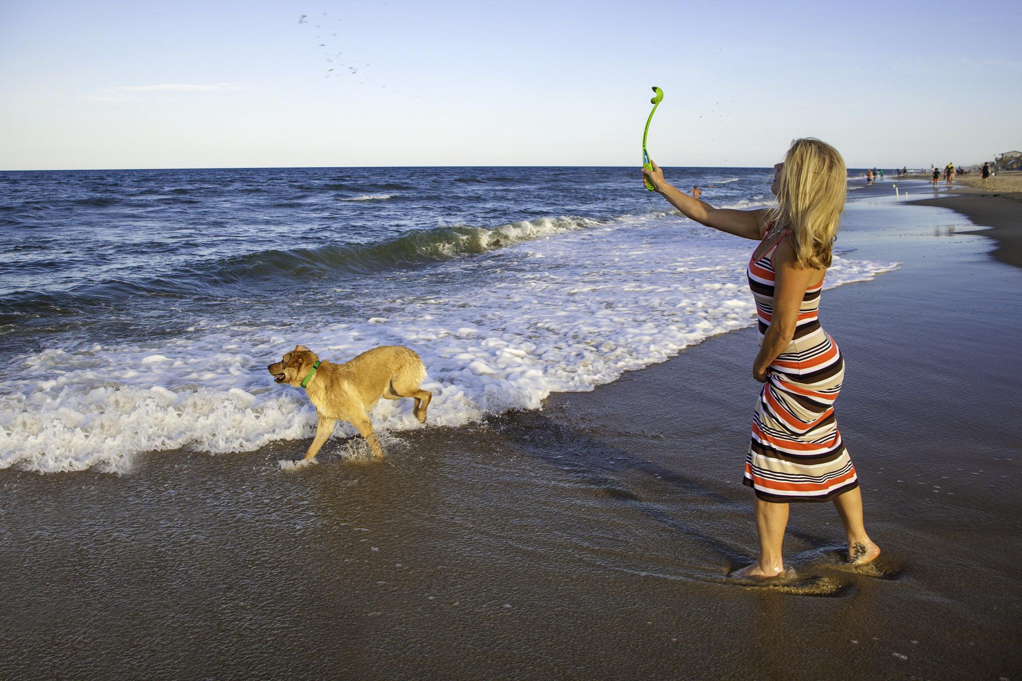 dog on beach in Kitty Hawk