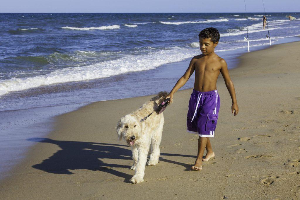 Dog on Kill Devil Hills beach