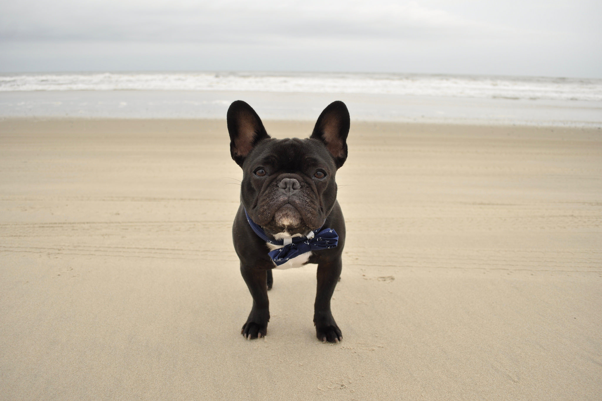 Are Dogs Allowed On The Beach In The Outer Banks?