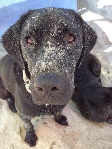 dog on Nags Head beach