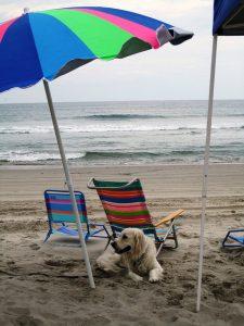beach dog under umbrella