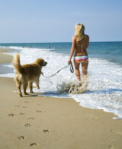 Dog on Southern Shores beach