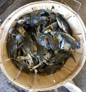 OBX blue crabs