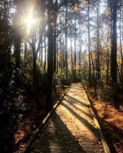 corolla boardwalk and trees
