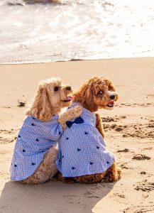 Brooke Mayo photoshoot dogs