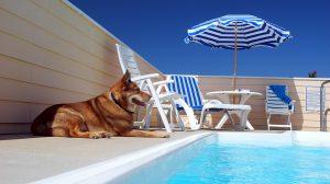 Dog at Pool