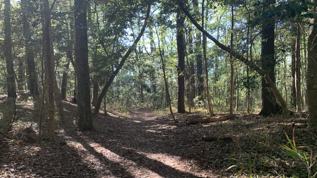 Nags Head Woods