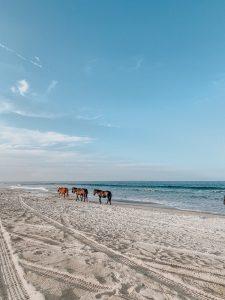 4x4 Horses