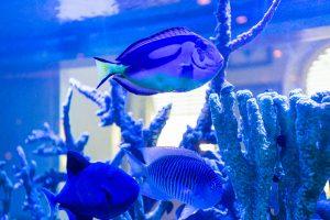 Mako's restaurant fish tank