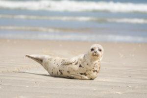 winter seal visitor