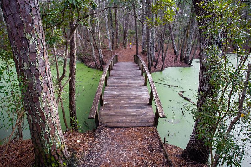 Nags Head Woods Preserve