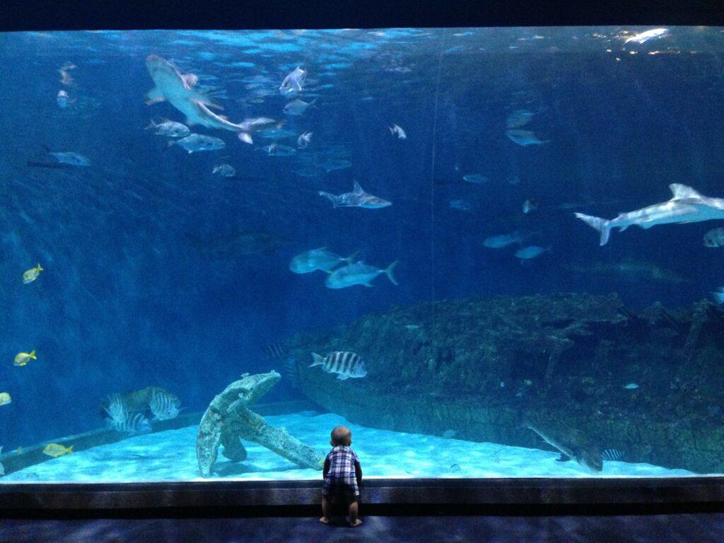 NC Aquarium Roanoke Island