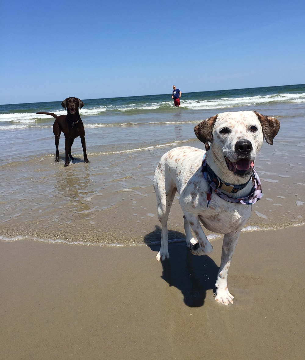 Duck Nc Pet Friendly Vacation Rentals Twiddy