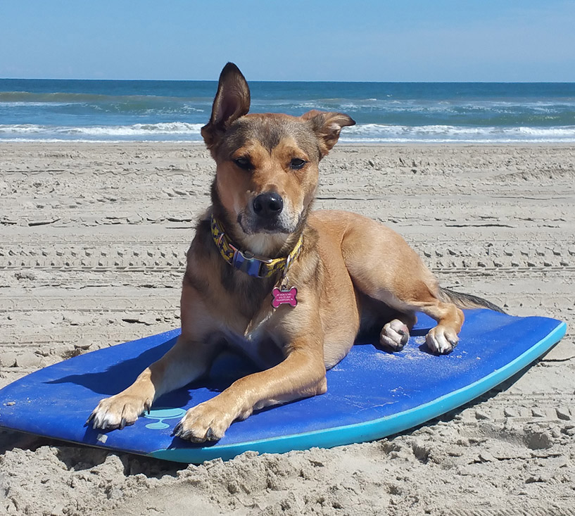 Corolla Pet Friendly Rentals