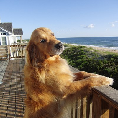 Pet-Friendly + Oceanfront