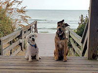Outer Banks pets